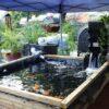 bạt dùng cho hồ cá cảnh
