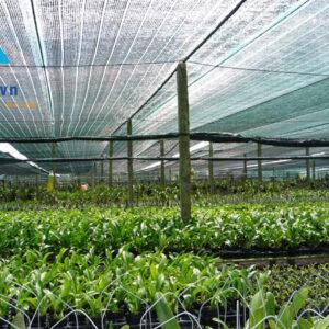 Lưới che ruộng rau